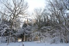 Bos onder de sneeuw