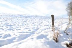 De weide achter het vakantiehuis onder de sneeuw
