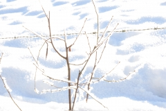 Takken vol sneeuw